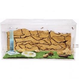 Antmeta Box-Sandwich